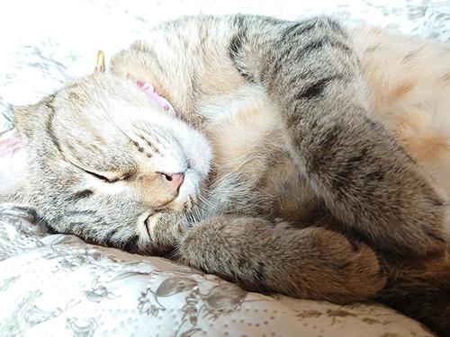 猫の癒やしあんこちゃんアップ
