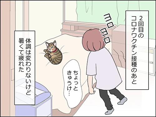 猫の癒やし1