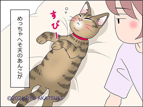 猫の癒やし4