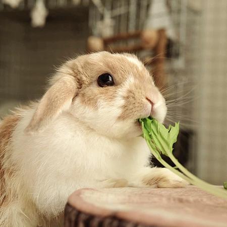 水菜とチャイちゃん