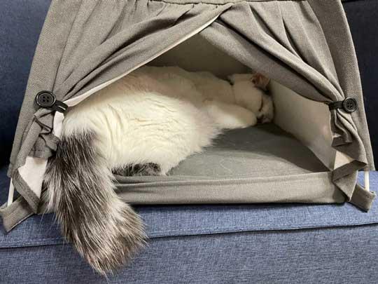 猫 ダイソー テント ペットハウス お気に入り