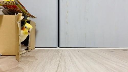 車庫入れ上手のウニちゃん