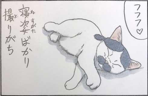 猫 漫画 拾い猫のモチャ 窓ごしの愛情 ツンデレ