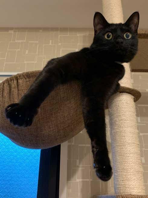 手形 黒猫 お腹 寝姿