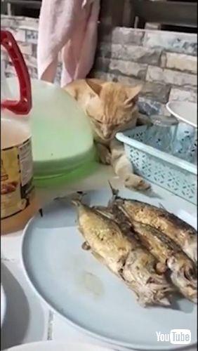 Feigns Sleep to Snag Snack