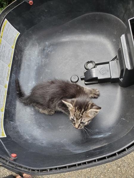 バイクのリアボックスに入れられていた子猫