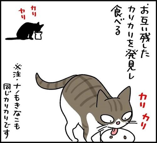 少しだけゴハンを残す猫ちゃん