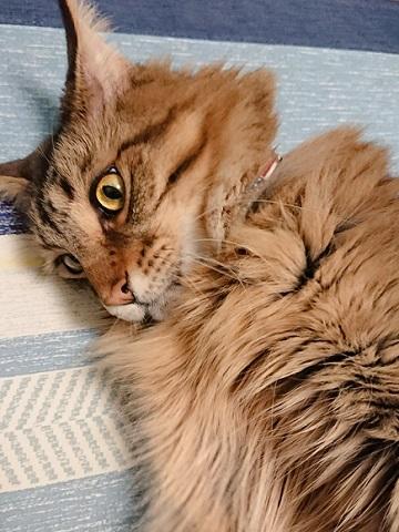 見守る化け猫