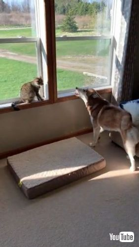 Pleads for Feline Friendship