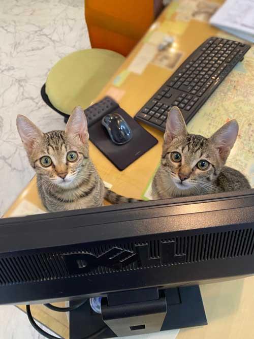 猫がいる不動産屋 ユーエルネット 江坂店 仕事 出勤 ネコ