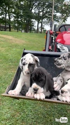 A Tractor Bucket