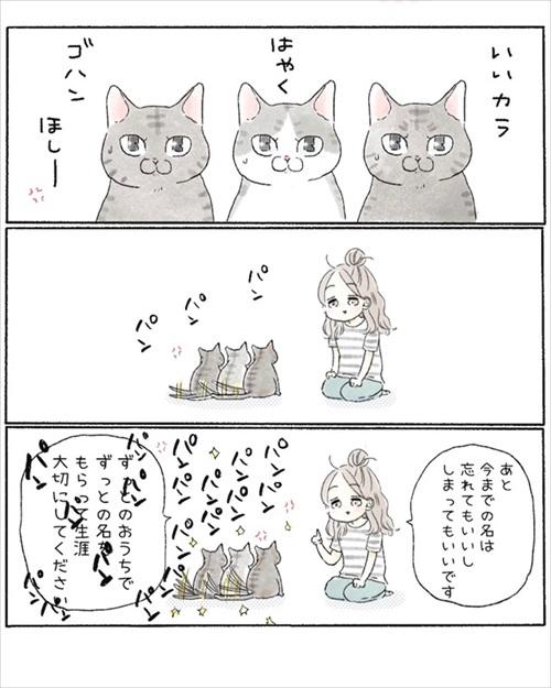 保護猫さんに語り掛けたこと