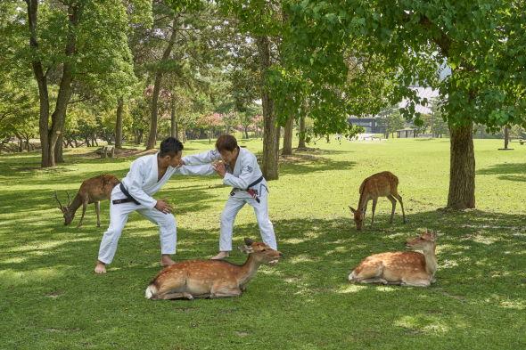 奈良公園 柔術 合成写真 コラ NR柔術