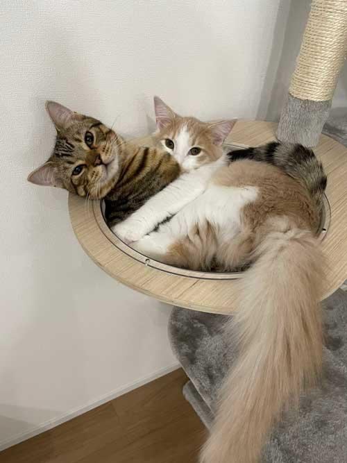 子猫 3カ月 ビフォーアフター 成長 生後5カ月