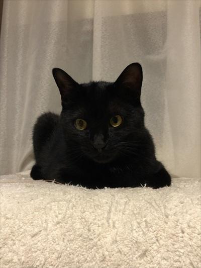 二度見した黒猫さん