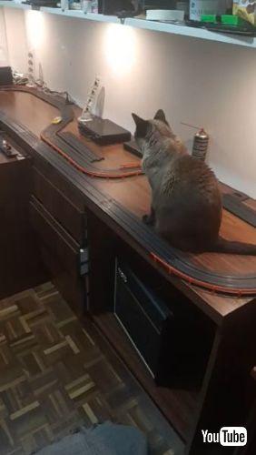 Slot Car Cat