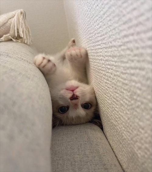 無防備すぎる猫ちゃん