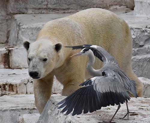 シロクマと鳥