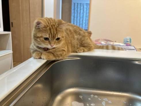 猫 ぷてぃこちゃん 給水機 直で洗顔