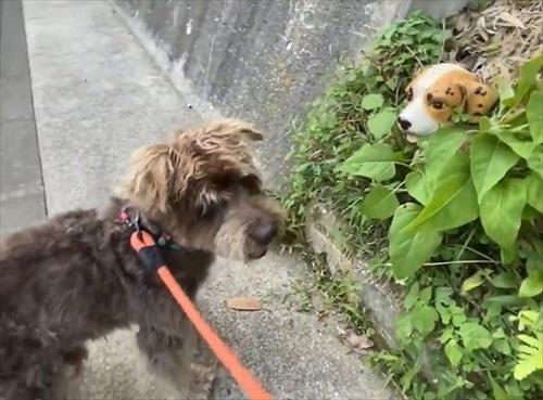 セトモノの犬に恋したワンちゃん
