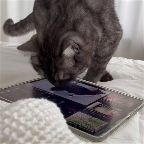 この猫が居れば戦争はなくなるのでは