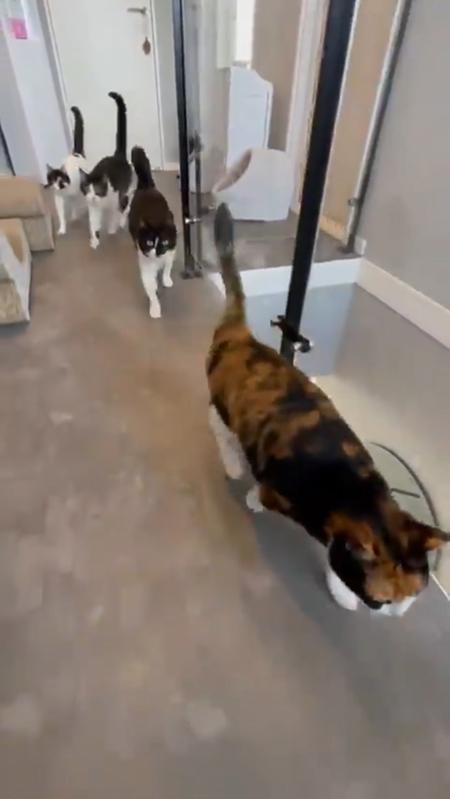 廊下を走る猫ちゃんたち