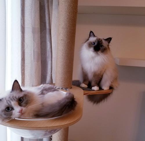 猫ちゃんたち