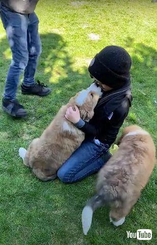 サプライズ子犬