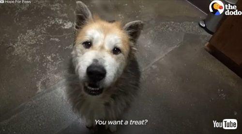 子犬のように甘えてくる老犬