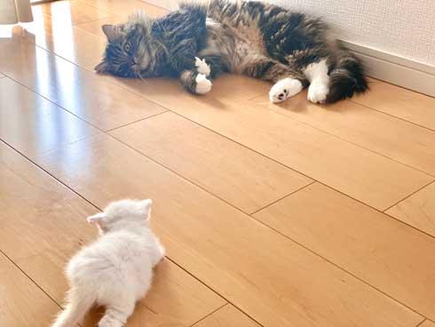 毛布 おくるみ 秒で寝た 赤ちゃん 子猫 寝顔 保護猫