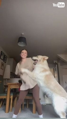 「Dog Attacks Owner Playfully While She Tries to Film Her Dance - 1240936」