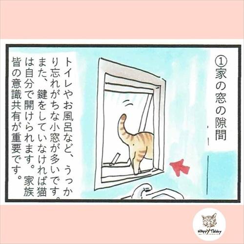 猫の脱走に気を付けよう