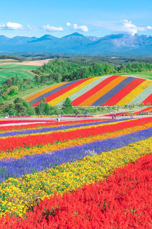 北海道 美瑛町 美瑛の丘 四季彩の丘 景色 写真