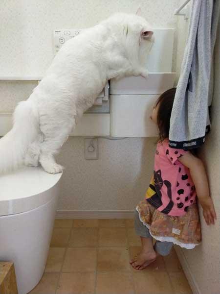 猫 トイレ 占領 メインクーン