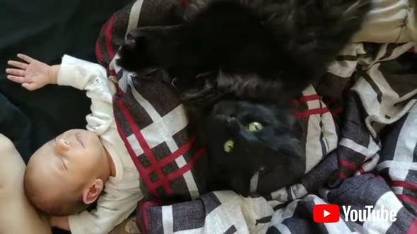 赤ちゃんが大好きな黒猫