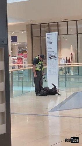 「Working Dog Takes a Play Break || ViralHog」