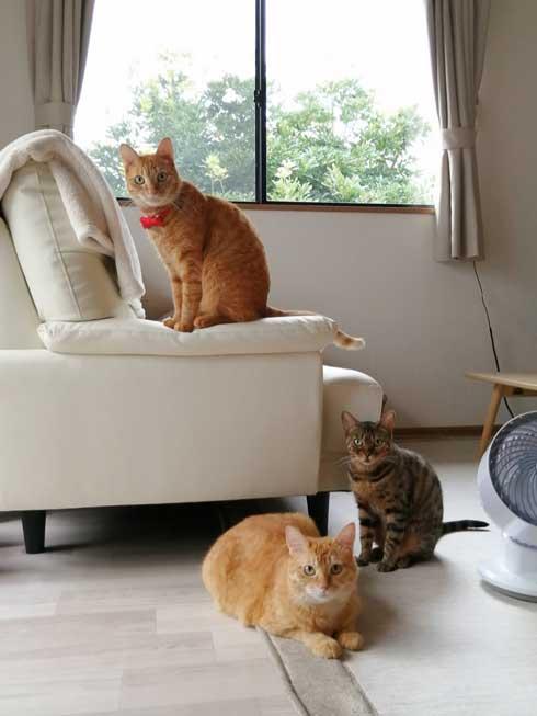 新生活 引っ越し 一番嬉しかったこと 猫吸い 喫ニャン所