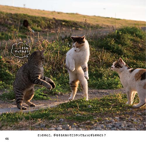 真剣に練習する猫ちゃんたち