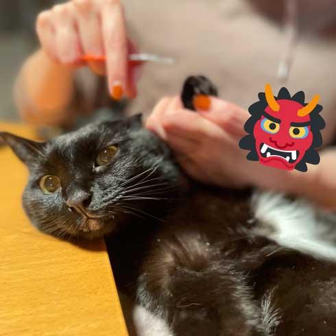 爪切り しおれた顔 かわいい 猫 表情 顔