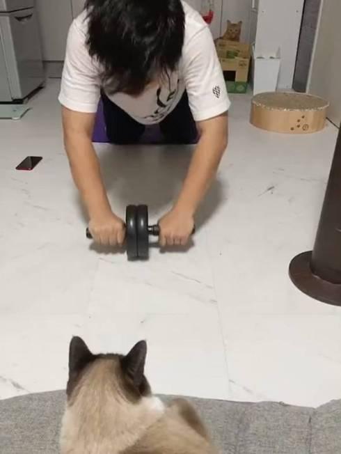 鬼教官 ネコ たぬきちゃん トレーニング
