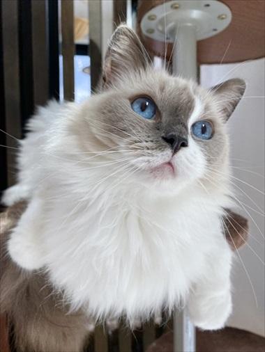 カリカリを残す猫ちゃん