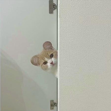 こちらを見つめるコニちゃん