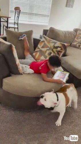 「Bulldog Spinning Nephew in Chair || ViralHog」
