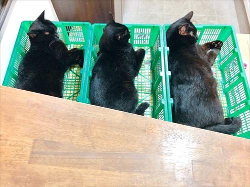 出荷待ちの猫さんたち