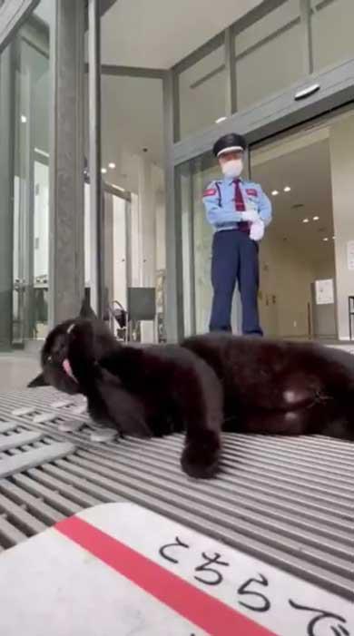 尾道市立美術館 警備員 猫 ケンちゃん 侵入 攻防