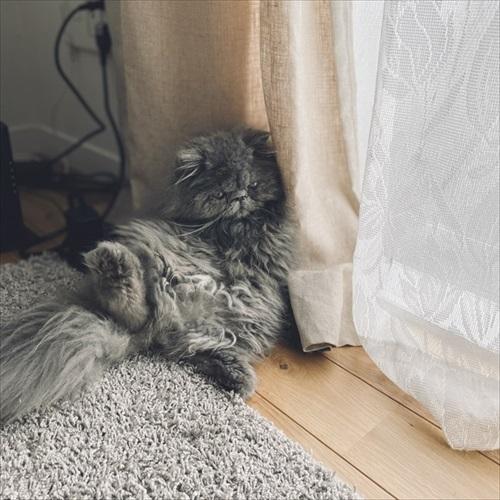 診察台で眠る猫ちゃん