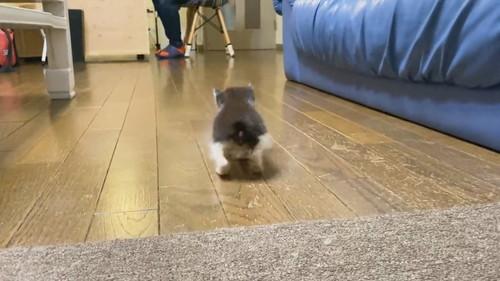 足が揃っちゃう子ネコちゃん