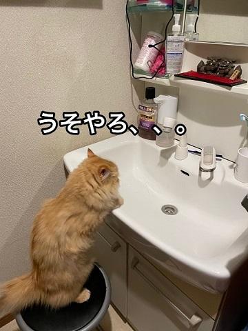人間みたいな猫