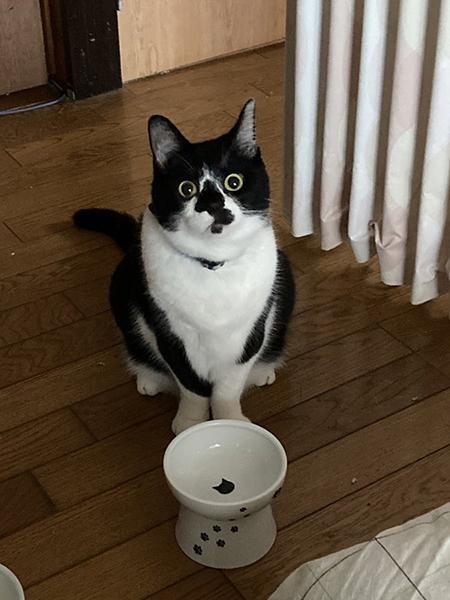 記憶喪失猫ちゃん