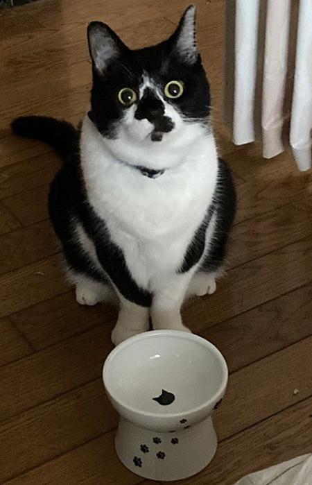 記憶喪失猫ちゃんトリミング